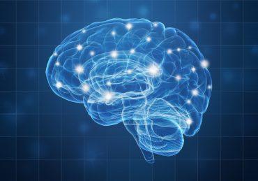 Un cerveau stimulé - Assistance Retraite