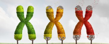 Ilustration de telomeres visibles aux extremites des chromosomes